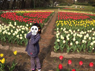 花見とチューリップ_e0163255_816849.jpg