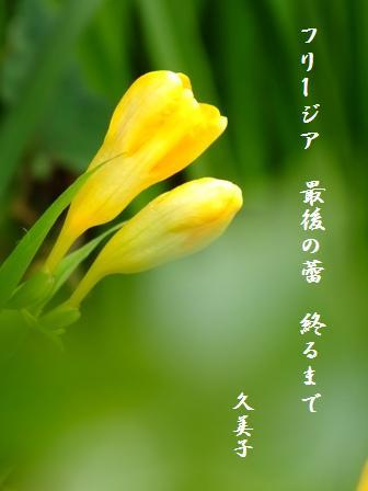 久美子の句_e0003966_13453316.jpg