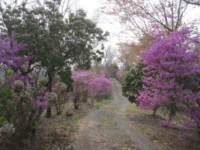 桜、染井吉野 陽光も終わり_f0085369_10585078.jpg