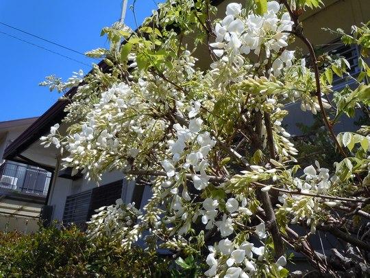 路傍の花、樹々の鳥(67) ~ 春の花が勢揃いして(1) ~_b0102572_1412275.jpg