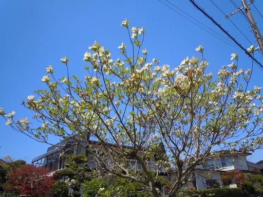 路傍の花、樹々の鳥(67) ~ 春の花が勢揃いして(1) ~_b0102572_141735.jpg
