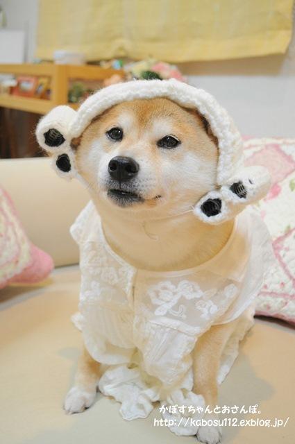 かぼちゃんの変身_a0126590_06040986.jpg