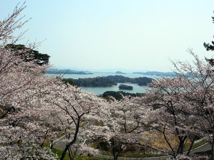 桜満開の西行戻しの松公園_d0116009_147754.jpg