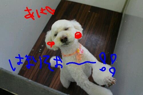 b0130018_21264759.jpg
