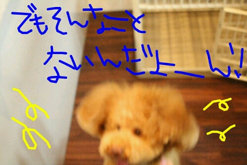 b0130018_2129518.jpg