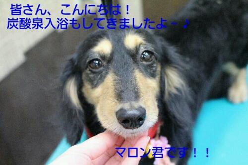 b0130018_21423117.jpg