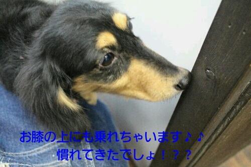 b0130018_21434713.jpg