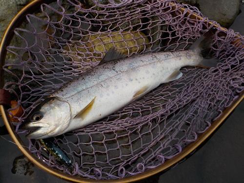 ・Fishing Diary 4/16_a0165135_1523865.jpg