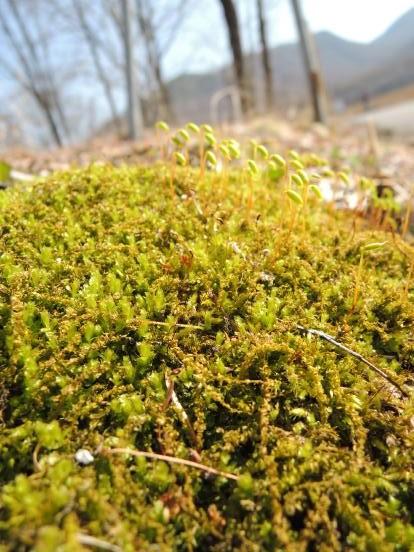いよいよ北軽井沢の季節が始まります_c0341450_15363125.jpg