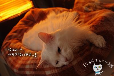 ミミちゃん 三月六日_e0031853_13145638.jpg