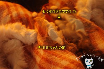 ミミちゃん 三月六日_e0031853_13155229.jpg