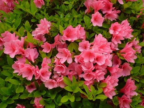 春から初夏へ_c0222861_20395089.jpg