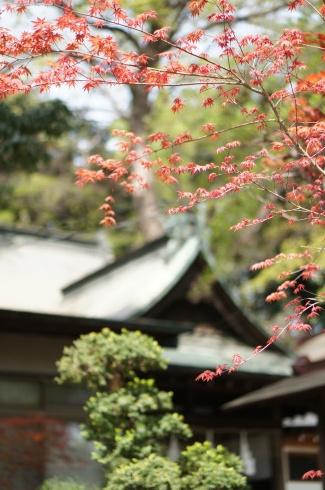 久々に浦和、調神社へ_e0165361_21350953.jpg