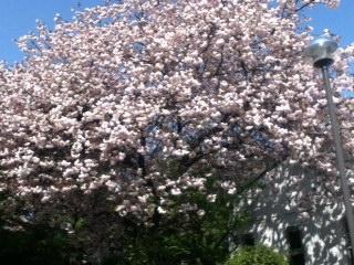 かすみか雲か匂いぞ出ずる・・春の空です。_f0291565_1126521.jpg