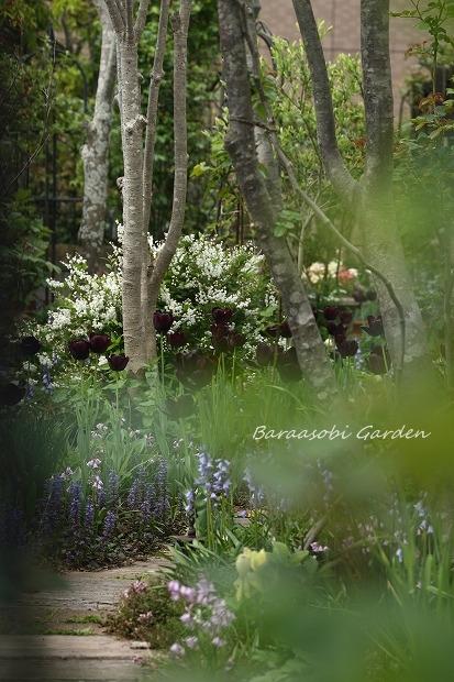 今日の庭から_a0135366_0554150.jpg