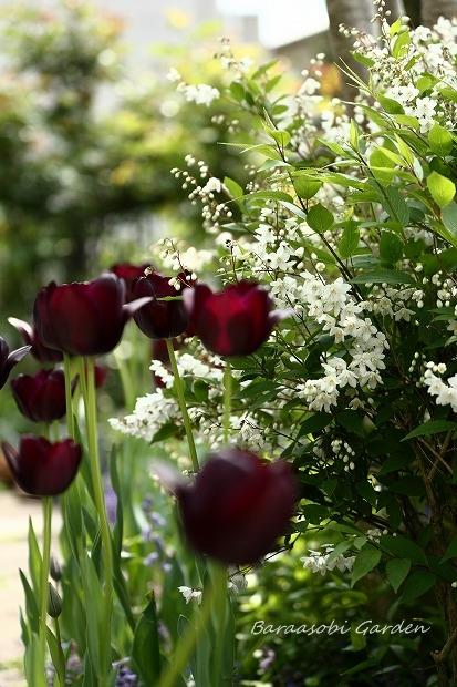 今日の庭から_a0135366_135889.jpg