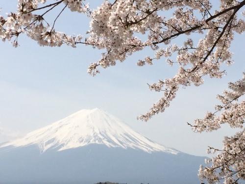 富士山と桜_a0335867_22182223.jpg