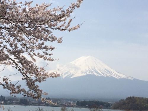 富士山と桜_a0335867_22213495.jpg