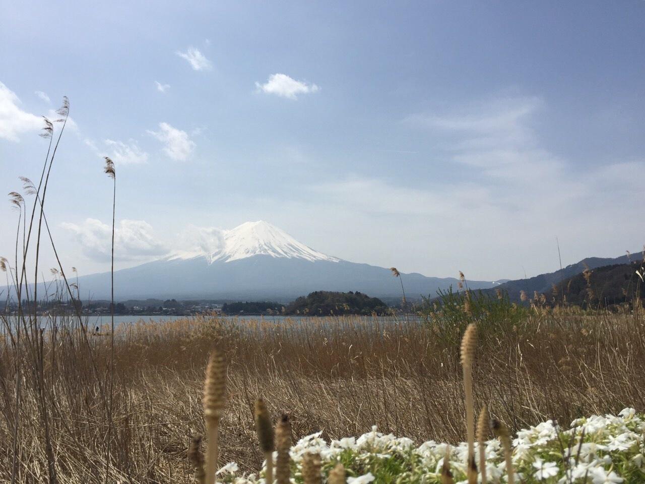 富士山と桜_a0335867_22222583.jpg