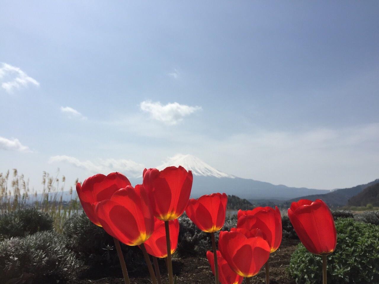 富士山と桜_a0335867_22233138.jpg