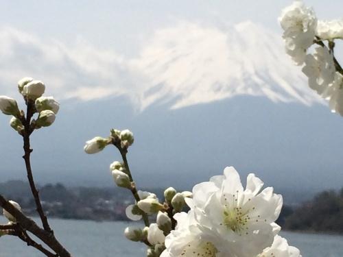 富士山と桜_a0335867_22245359.jpg