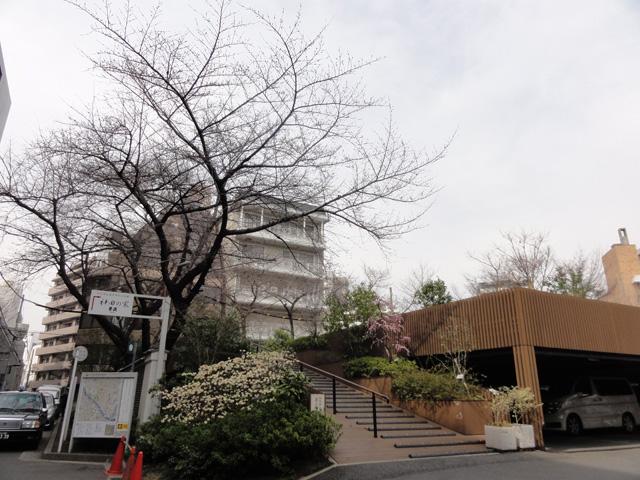 神田明神の桜 (2015/3/31 ~ 4/2)_b0006870_1929378.jpg