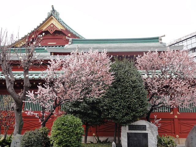 神田明神の桜 (2015/3/31 ~ 4/2)_b0006870_19301236.jpg