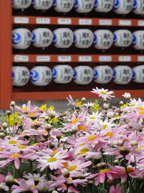 神田明神の桜 (2015/3/31 ~ 4/2)_b0006870_1936654.jpg