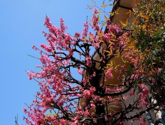 路傍の花、樹々の鳥(67) ~ 春の花が勢揃いして(1) ~_b0102572_1411507.jpg