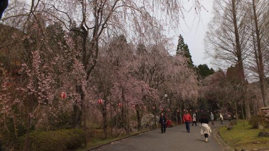 世羅・甲山ふれあいの里・しだれ桜_b0214473_1311568.jpg