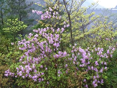 春の砥峰高原_e0289203_16121138.jpg