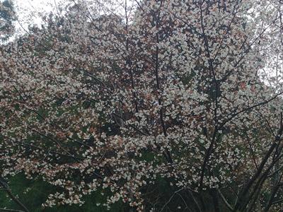 春の砥峰高原_e0289203_1612471.jpg