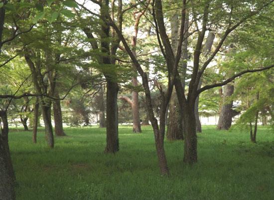 ヤマブキとシャガの揃い咲き 京都御苑_e0048413_1758489.jpg