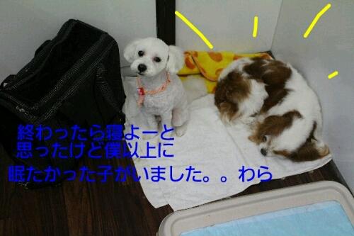b0130018_0254853.jpg