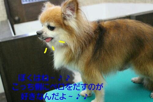 b0130018_0313184.jpg
