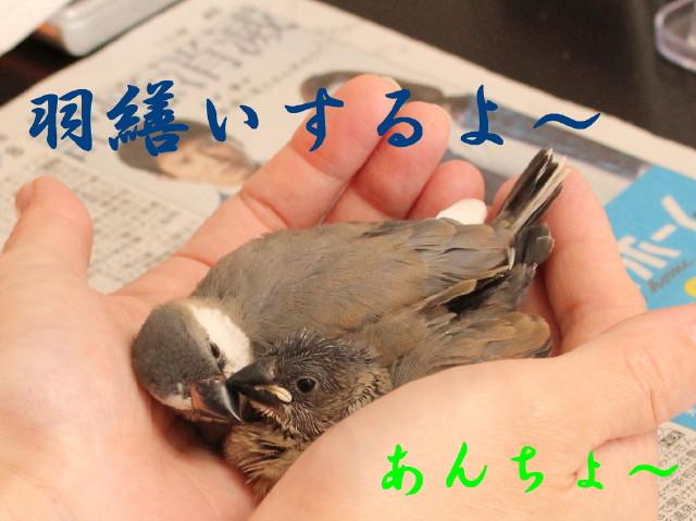 c0365734_1513314.jpg