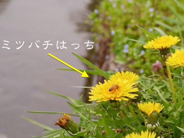 c0190940_1837349.jpg