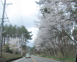 山麓は桜前線通過中。_d0050155_9542359.jpg