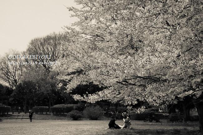 春の大塚池_d0162864_5103594.jpg