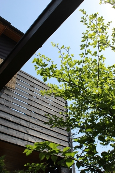新緑の庭で_c0310571_21183513.jpg