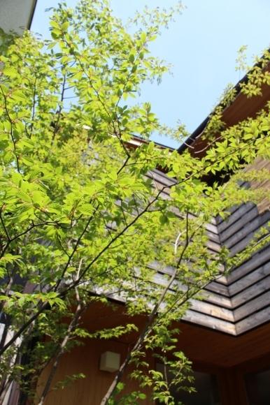 新緑の庭で_c0310571_21185912.jpg