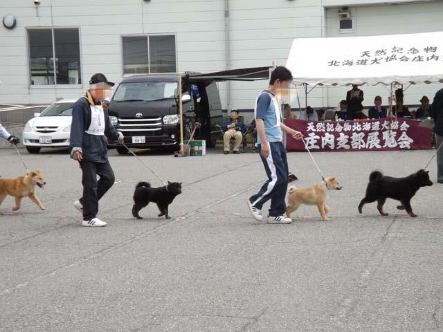 北海道犬の展覧会を見に山形県へ_f0019498_1931243.jpg