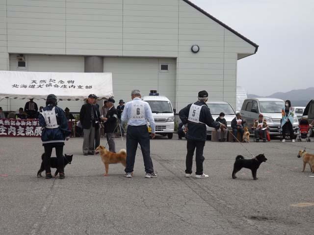 北海道犬の展覧会を見に山形県へ_f0019498_19313913.jpg