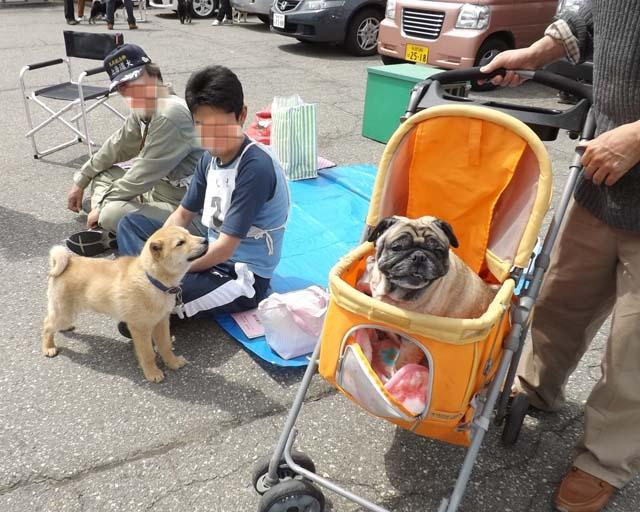 北海道犬の展覧会を見に山形県へ_f0019498_19333591.jpg