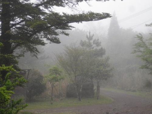 霧っています_e0179508_14014722.jpg