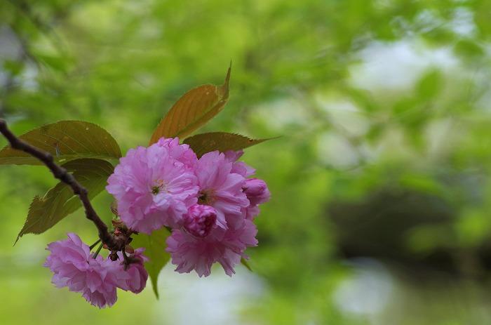 春の嵐_d0147812_2059196.jpg