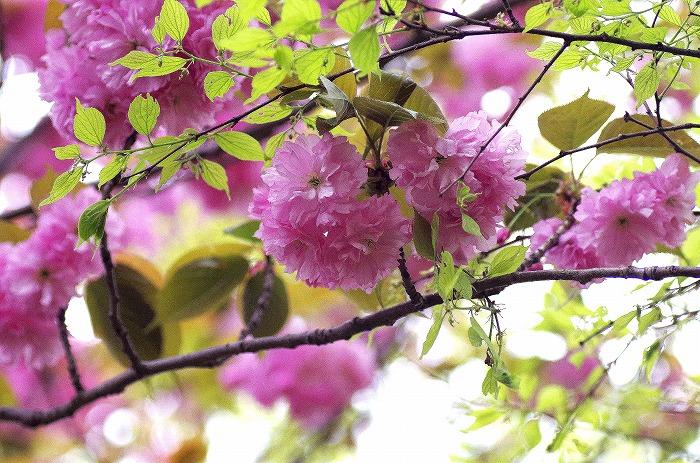 春の嵐_d0147812_20592615.jpg