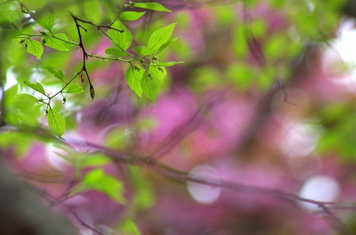 春の嵐_d0147812_2104215.jpg