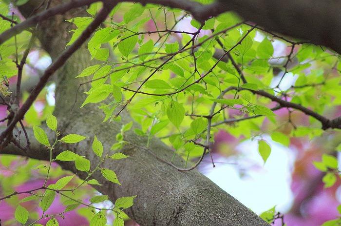 春の嵐_d0147812_2104879.jpg