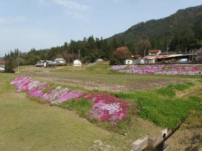 吉山の芝桜_c0116915_011991.jpg